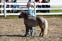 Wednesday 2014-4H Saddle Horse Open Trail in Hand